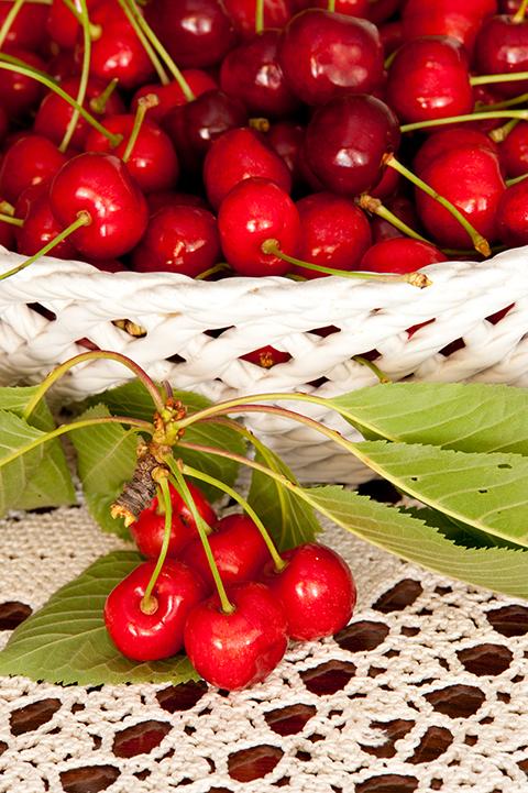 češnje sladke rdeče vipavske nasad bogdan slokar-3366